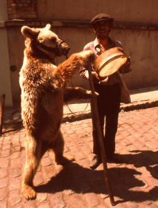 dancing bear in turkey