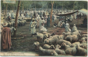Although this is a picture of an Algerian sheep market in 1906, it is very similar to the one across our house in 1965 Jeddah.