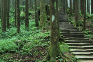The trail in the forest on Alishan.